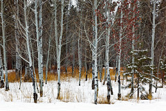 In Search of Snow (Jared Ropelato) Tags: wild jared snow nature landscape day outdoor conservation environment wilderness eco enviro jaredropelato ropelatophotography