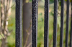 I'll show you how to build your fences, set restrictions (well, don't stop calling) Tags: fence bokeh fencefriday nikond5100