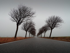 Into The Mist (parkerbernd) Tags: road trees winter mist fog germany lumix grey vanishingpoint alley nebel wind perspective grau explore bume fehmarn allee kahl schrge orth fluchtpunkt windschief lx3