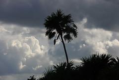 Guatemala  El Caribe (Galeon Fotografia) Tags: guatemala bahiadeamatique wow1   galeonfotografa