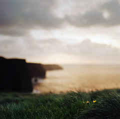 safe to shore, though the truth may vary (manyfires) Tags: ocean ireland sunset sea flower film grass mediumformat square landscape glow bokeh shoreline eire cliffs dandelion hasselblad cliffsofmoher atlanticocean goldenhour countyclare hasselblad500cm littletalks ofmonstersandmen safetoshore