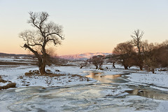 Frozen trees (Nick-K (Nikos Koutoulas)) Tags: trees lake tree frozen greece  kozani