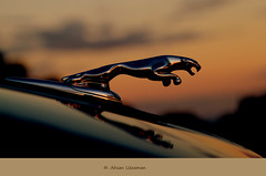Jaguar (.....in sunset) (Ahsan. (Busy..)) Tags: blue brown blur closeup dark photography evening focus dof jag jaguar canon7d 1755usm mygearandme blinkagain bestofblinkwinners