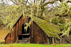 Barn ruin near Willits (Stealing-Beauty Photography) Tags: ca plants usa nature architecture buildings moss ruins willits blinkagain