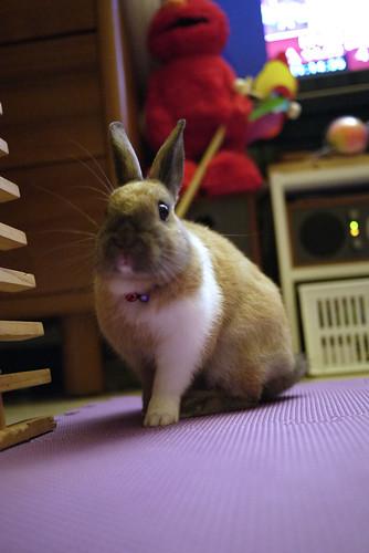 兔-NANA_30