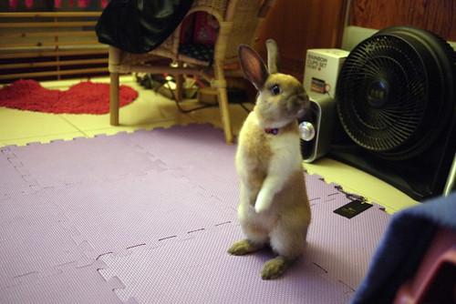 兔-NANA_47