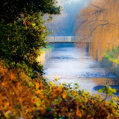 Misty morning (Steve-h) Tags: park bridge trees ireland dublin orange sun sunlight mist macro green art tourism nature sunshine yellow last canon river lens design interesting weeds europe tourists days explore willow seven handheld recreation brambles aerlingus dartry steveh briars thegalaxy canoneos5dmkii saariysqualitypictures canoneos5dmk2 canonef100mmf28lmacroisusm mygearandme mygearandmepremium mygearandmebronze mygearandmesilver mygearandmegold mygearandmeplatinum mygearandmediamond musictomyeyeslevel1 flickrstruereflection1 flickrstruereflection2 flickrstruereflection3 flickrstruereflection4 flickrstruereflection5 flickrstruereflection6 flickrstruereflection7 flickrstruereflectionexcellence rememberthatmoment rememberthatmomentlevel4 rememberthatmomentlevel1 rememberthatmomentlevel2 rememberthatmomentlevel3 rememberthatmomentlevel7 rememberthatmomentlevel9 rememberthatmomentlevel5 rememberthatmomentlevel6 rememberthatmomentlevel8 rememberthatmomentlevel10 vigilantphotographersunite vpu2 vpu3 vpu4 vpu5 vpu6 vpu7