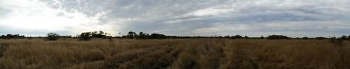 Okaloacoochee Slough Panorama