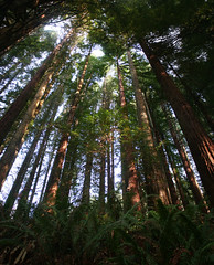 Sursum (alishariat) Tags: trees vacation sky holiday color green tourism up pine oregon america forest canon portland photography us photo fantastic unitedstates awesome sightseeing adventure explore stunning trunk destination ferns exploration touring upwards alishariat intrepidtravels