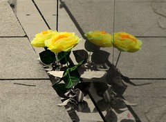 KOREAN flower WAR (Sigurd66) Tags: usa flower washingtondc dc washington districtofcolumbia unitedstates yellowflower koreanwarveteransmemorial thedistrict koreanwar estadosunidos eeuu distritodecolumbia koreanwarveterans distritocolumbia
