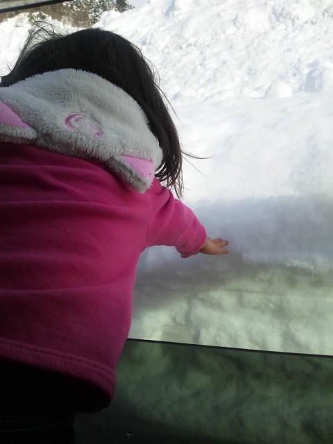 車から雪にタッチ。の写真