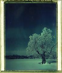 A Frozen Place (Bastiank80) Tags: camera blue winter portrait sky snow cold tree film field analog giant landscape polaroid frozen nationalpark large type instant 4x5 format expired wald largeformat falkenstein arber 59 bayerischer wista polanoid schachten ruckowitz