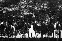 All Alone with Silence.... (Z A Y A N) Tags: life trees people bw mist black silhouette fog rural forest canon dark walking lost photography eos living alone village foggy lifestyle walker silence mysterious horror lonely farmer blackforest bangladesh mystic drunkphotography wintermorning beforesunrise southasia 2011 zayan manikganj livelihood villageroad 550d beautifulbangladesh villagelifestyle rebelt2i kissx4 zayan1904 gettyimagesbangladeshq12012