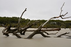 Forces of Nature (CordsImages) Tags: ocean beach nature sand erosion beaufort forcesofnature lowcountry huntingisland scstatepark vision:outdoor=0972