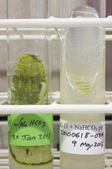 ORNG0666 (David J. Thomas) Tags: culture cave algae microbiology slant agar cyanobacteria phycology lyoncollege bg11 photobiont phycobiont
