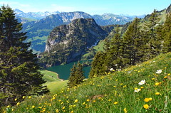 der Sommer (welenna) Tags: blue light summer sky mountain lake mountains alps tree landscape switzerland see licht view swiss blumen berge alpen blume baum berneroberland stockhorn schwitzerland