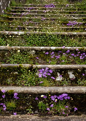 stairs (alunwilliams155) Tags: stairs steps sizerghcastle nationaltrustproperties