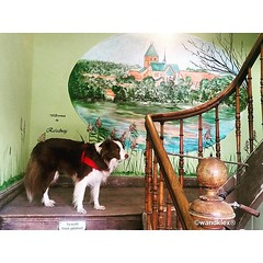 Damit ich beim Heimkommen nie vergessen... (wandklex Ingrid Heuser freischaffende Knstlerin) Tags: dog art deutschland mural innenarchitektur interieur kunst border bahnhof h hund bordercollie schleswigholstein holstein flur ratzeburg schleswig treppenhaus malerei wandmalerei norddeutschland herdingdog wandbemalung handgemalt walldesign herdingdogs wandklex dogsofinstagram uploaded:by=flickstagram bordercolliesofinstagram instagram:venuename=bahnhofratzeburg instagram:venue=51075171 instagram:photo=12397583307414590161487357881