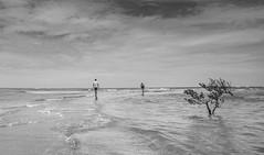 20160105 - Boipeba 245 (blogmulo) Tags: travel brazil blackandwhite beach brasil mangrove bahia salvador boipeba