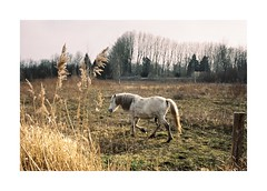 (Punkroyaltiger) Tags: horse film nature contax analogue portra