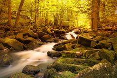 IMG_0479 (klauskosak) Tags: wasser natur bayerischerwald 2013 waldkirchen sausbachklamm