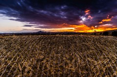 DSC_9868 (christopherpaparisvas) Tags: sunset colors field amazing horizon cyprus haystack larnaca d800 kalo xorio