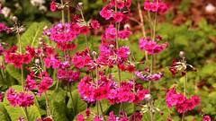 . (johndunlop17) Tags: flowers wild castle gardens kennedy
