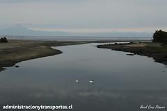 Aituy (Chilo) (Empezar de Cero / Ariel Cruz) Tags: chile patagonia puente island volcano swan south corcovado sur isla cisne chilo volcn blacknecked aituy chaitn cuellonegro michinmahuida