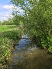 Lunch time walk around University Parks (breakbeat) Tags: trees summer green nature water publicspace creek river landscape stream university outdoor parks foliage oxford cherwell