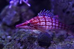 Monterey Bay Aquarium (Andrew Yun Photography) Tags: ca aquarium montereybayaquarium marinelife aquaticlife 2016 andrewyunphotography
