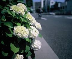 Loop Road No.7 (YUKIHAL) Tags: 120 film analog mediumformat pentax bokeh 55mm fujifilm 6x7 smc f4 67 provia100f pentax67 rdpiii p67