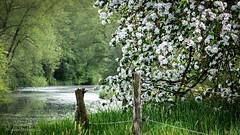 Bellevue (guenterkurz.de) Tags: zaun landschaft baum bellevue flus brenz
