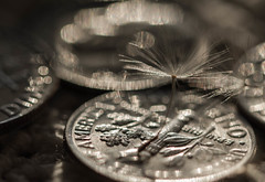 Silver Sparkle (Captured Heart) Tags: money coins wishes dimes dime wish dandelionseeds