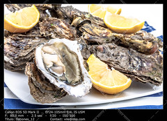 Oysters (__Viledevil__) Tags: food shells fish lunch cuisine lemon healthy marine raw dish shell tasty plate fresh gourmet delicious eat meal shellfish seashell seafood citrus appetizer organic oyster scallop expensive luxury freshness delicatessen mollusk nutrition opened bivalve uncooked
