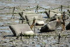 Nisqually Shellfish Farm (USDAgov) Tags: drought washingtonstate climatechange adaptation nifa usdaresults climatehub