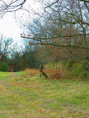 20111119-nhm-peeler-park-bill-off-trail-021 (kelstew) Tags: nashville ht greenways peelerpark hikingtennessee