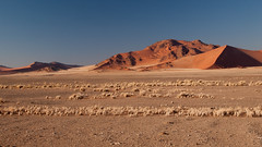 Dunes of Sesriem-Sossusvlei NP | 3