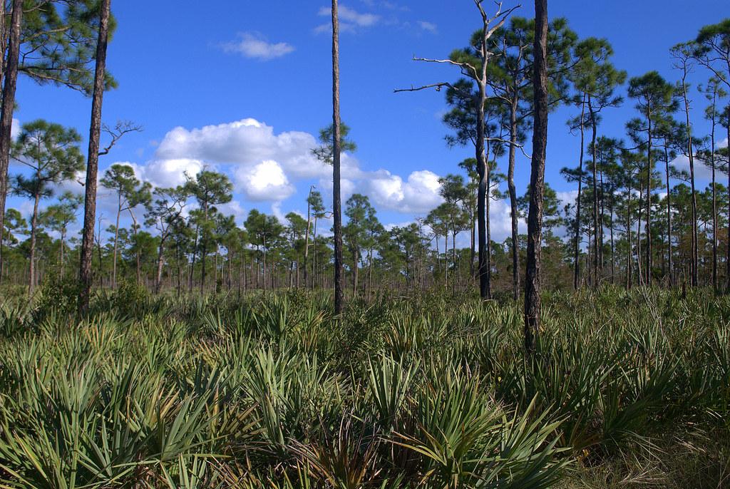 southeastern forest experiment station research paper se-256 По вашему запросу нет объявлений убедитесь, что вы указали правильные параметры.