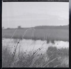 (soleá) Tags: blackandwhite holland film nature water grass landscape photography nederland negative drenthe yashicamat124g soleá carmengonzalez echten middenformaat