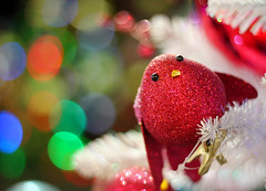 2/25 Christmas Count Down-The Red, Red Robin Comes Bob, Bob, Bobbin Along... (Photography by jrb) Tags: christmas decorations robin glitter lights shiny bokeh magic sparkle round christmastrees magical spheres baubles wentworthgardencentre christmas2011