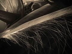 Morning Baleen 3... (Sea Moon) Tags: hairy alaska feeding plate fringe whale plankton