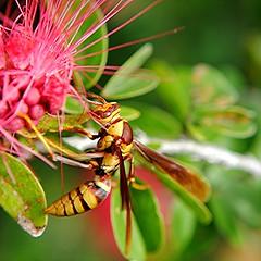 Paper Wasp composes its elegant g
