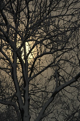 One year ago (mariannakoutna) Tags: winter sun snow nature december afternoon e foglia albero colorsoftheheart