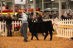 IMG_7411 (Brownfield Ag News) Tags: beef indianapolis congress hoosier