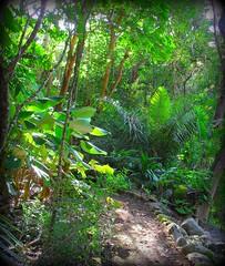 ~~WaimeaBotanicalGarden#4~~ (TravelsThruTheUniverse) Tags: tropicalplants tropicalflowers zengardens oahuhawaii tropicalgardens tropicalfoliage waimeavalleybotanicalgarden tropicallandscapes waimeavalleyoahu waimeaparkhaleiwaoahu