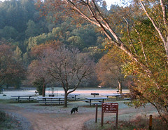 Orchard (eks4003) Tags: trees orchard redwoods canyontrail redwoodregionalpark sreamtrail