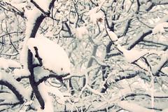 Winter Days..... (G i a c o m o - M a c i s) Tags: sardegna winter snow cold neve inverno freddo fonni