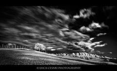 Flowing of Time #2 (Luca Cesari Photography) Tags: sky bw italy motion tree clouds landscape fineart infrared 5d2 lucaeos happy2012
