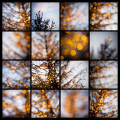 shine on (helen sotiriadis) Tags: christmas blue orange holiday black tree yellow collage canon lights twilight published dof bokeh depthoffield canonef50mmf14usm canoneos40d dslrmag
