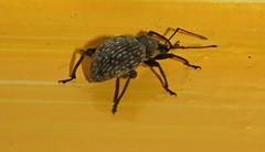Spider (ianharrywebb) Tags: spider iansdigitalphotos yahoo:yourpictures=nature